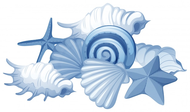 Diversi tipi di conchiglie su bianco