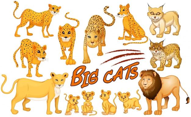 Diversi tipi di illustrazione di leone e tigre