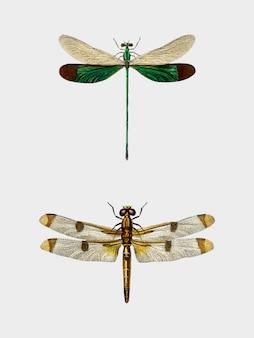 Diversi tipi di libellule illustrate da charles dessalines d'orbigny (1806-1876).