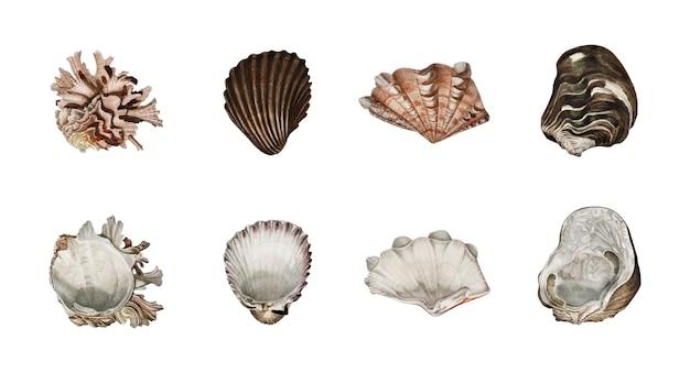 Diversi tipi di molluschi illustrati da charles dessalines d orbigny (1806-1876).