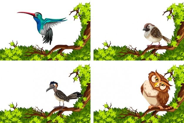 Diversi uccelli selvatici sull'illustrazione del ramo