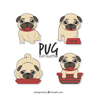 Divertente collezione di pug