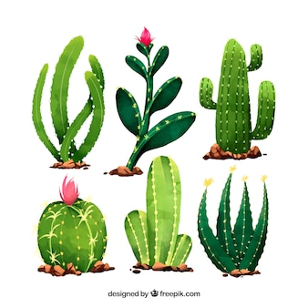 Divertente serie di cactus con stile acquerello