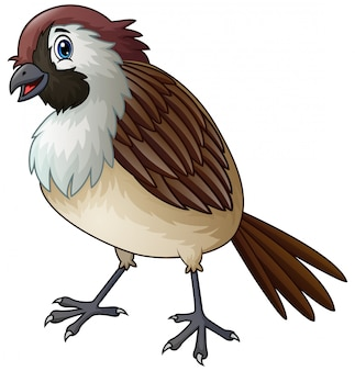 Divertente un cartone animato di uccello passero