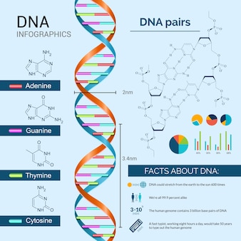 Dna infographics set