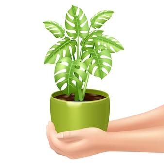 Donna che tiene una pianta d'appartamento con le mani e la pentola verde