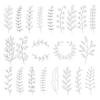 Doodle floreale della raccolta del ramo della vite della foglia