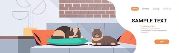 Due gatti che dormono sul cuscino lanuginoso adorabile animali cartoon rilassante sul divano moderno salotto interno domestico kitty home pet concept flat full length copia spazio orizzontale