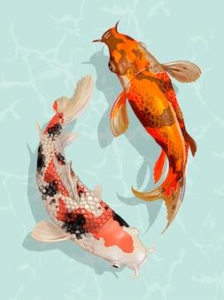 pesce koi vettori foto e file psd gratuiti