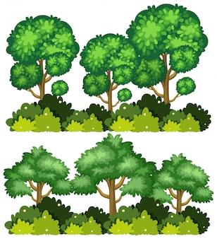 Due set di grandi alberi su sfondo bianco