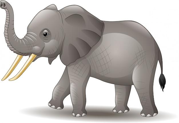 Elefante di cartone animato isolato su sfondo bianco