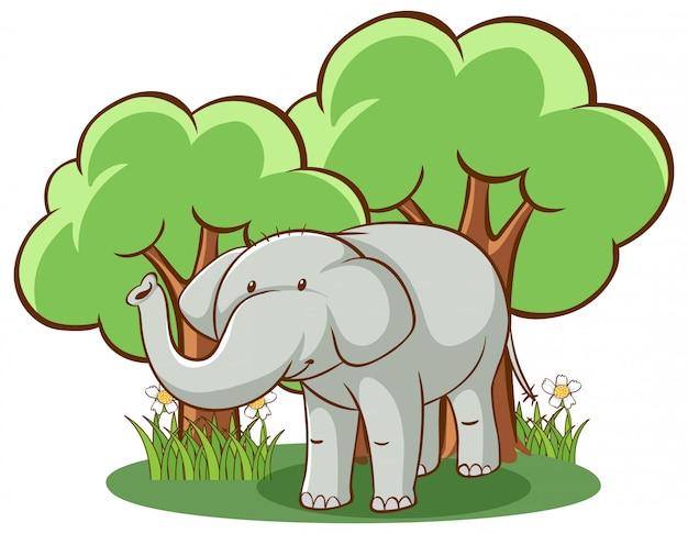 Elefante selvaggio su bianco