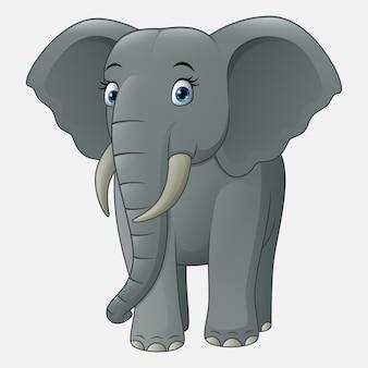 Elefante sveglio del bambino isolato su priorità bassa bianca