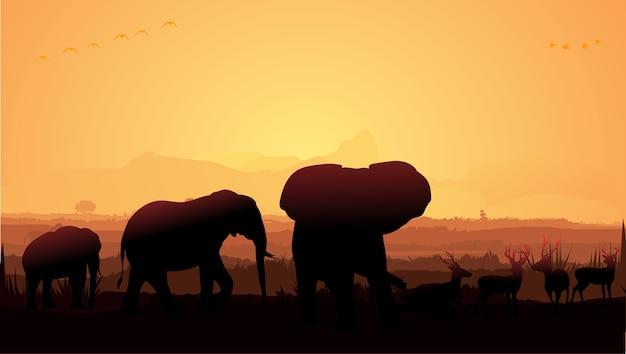 Elefanti nella giungla