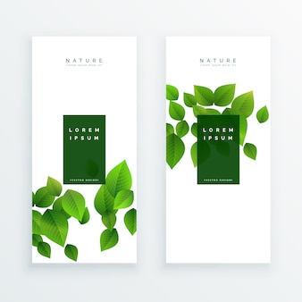 Elegante bandiera bianca con foglie verdi