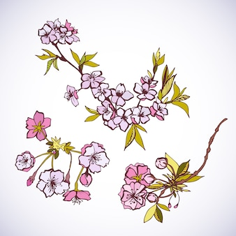 Elementi decorativi in fiore sakura