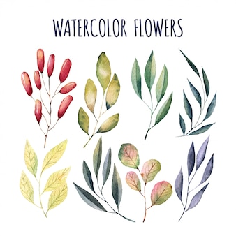 Elementi di fiori ad acquerelli