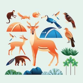 Elementi di illustrazione della foresta e del campo