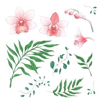 Elementi floreali di fiori tropicali orchidea