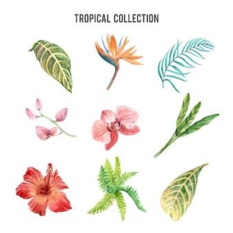Elemento di progettazione dell'acquerello della pianta tropicale con la pianta floreale, insieme dell'illustrazione di botanico.