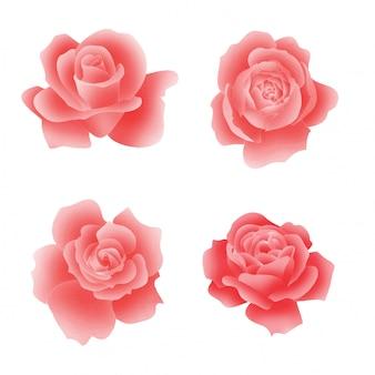 Elemento di rosa rossa fioritura stile acquerello