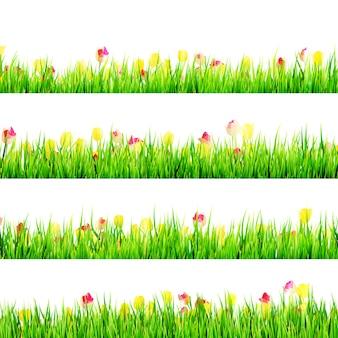 Erba verde con i fiori della margherita isolati su bianco.