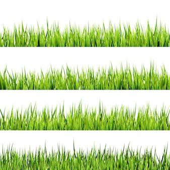 Erba verde della molla fresca isolata su bianco