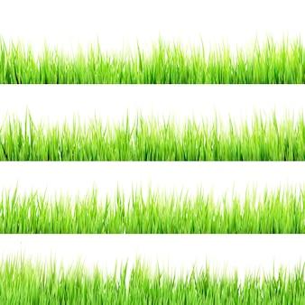 Erba verde della molla fresca isolata su fondo bianco.