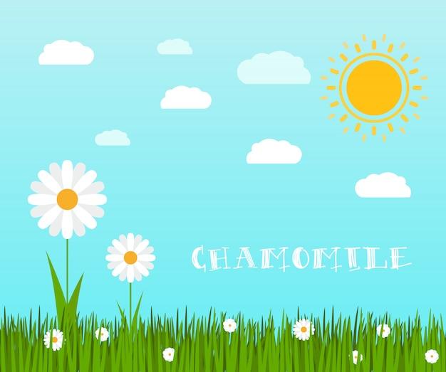 Erba verde di primavera con paesaggio di camomilla
