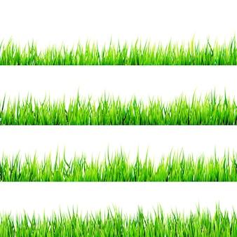 Erba verde isolata su bianco