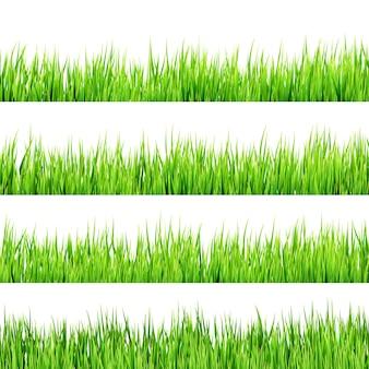 Erba verde isolata su fondo bianco.