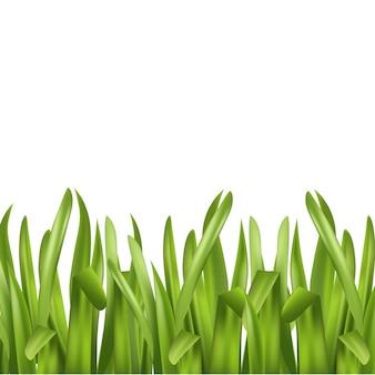 Erba verde isolata