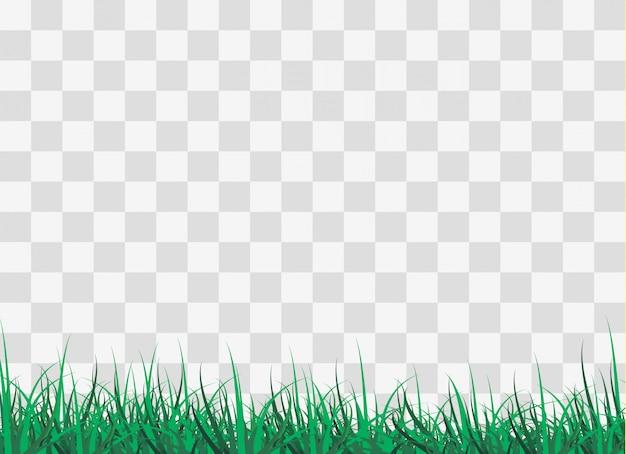 Erba verde sulla radura nella foresta,