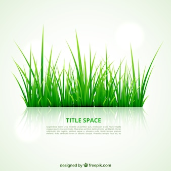 Erba verde template