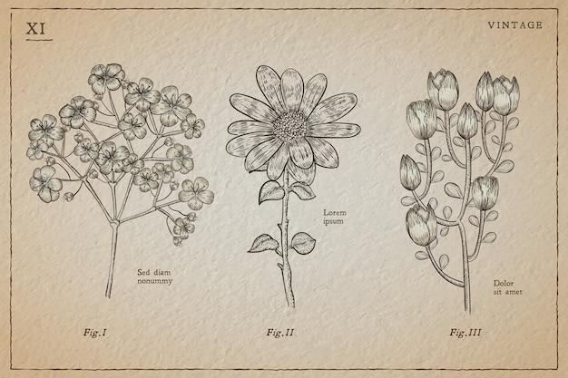 Erbe botaniche e fiori selvatici in stile vintage