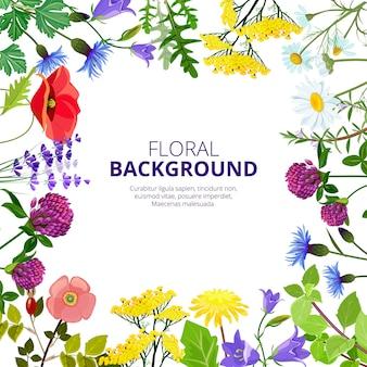 Erbe cosmetici. immagini botaniche dei fiori del miele della medicina di bellezza dei fiori di erbe e della medicina di salute