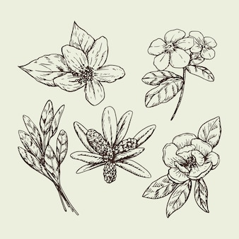 Erbe e fiori disegnati a mano