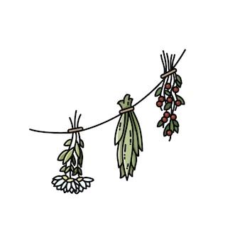 Erbe essiccate su un'immagine piatta di stile di vettore del filo