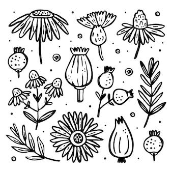 Erbe, piante selvatiche, clip art. fiore, ramo, foglia, cipolla, bacca.