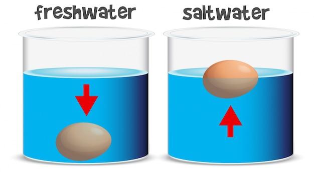 Esperimento scientifico per acqua dolce e acqua salata