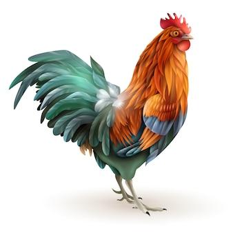 Estratto di vista laterale del gallo rosso del gallo