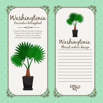 Etichetta vintage con pianta di washingtonia