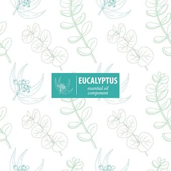 Eucalipto. modello senza cuciture d'annata disegnato a mano di vettore. ornamento botanico