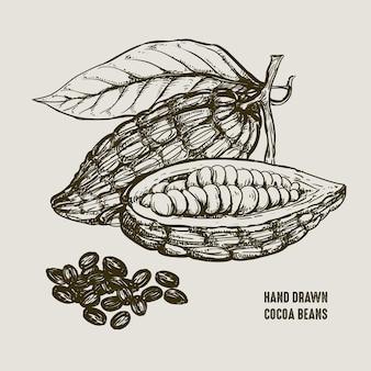 Fagioli di cacao disegnati a mano