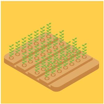 Fagioli lunghi di agricoltura isometrica sul campo, illustrazione di vettore