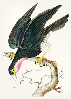 Falco dalla gola viola disegnato a mano