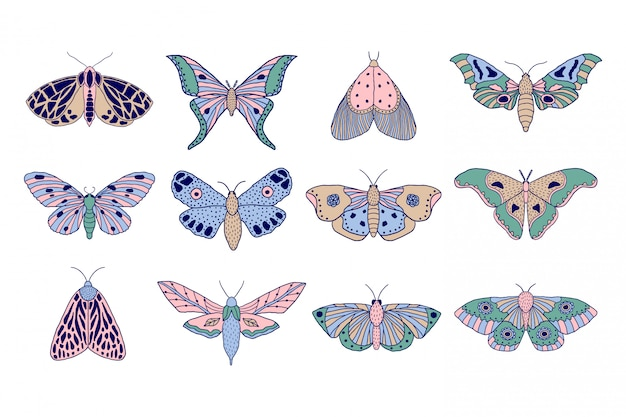 Falene colorate e farfalle
