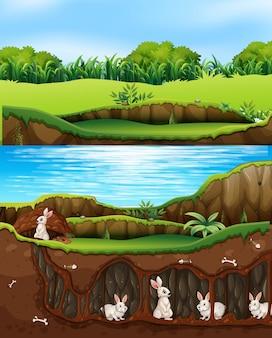 Famiglia di conigli che vivono nella natura vicino al fiume