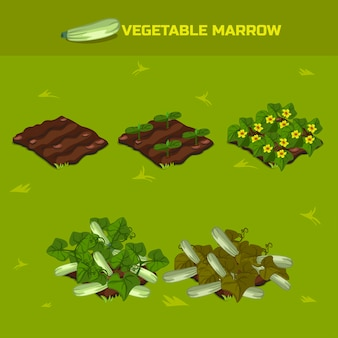 Fase isometrica della crescita midollo vegetale