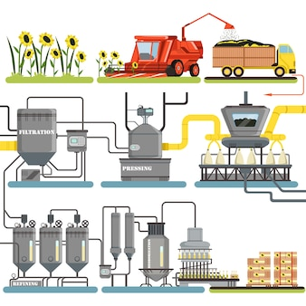 Fasi del processo di produzione di olio di girasole, raccolta di girasoli e confezionamento di prodotti finiti illustrazioni su sfondo bianco